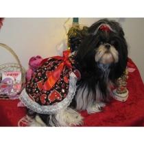 valentine's day puppy